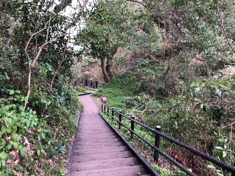 城ケ崎の森
