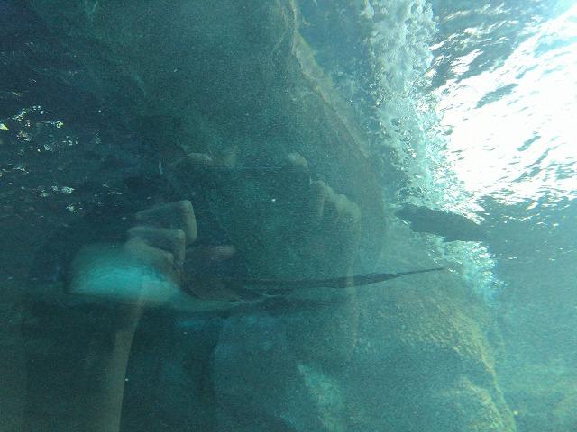 水中トンネル内から見える魚
