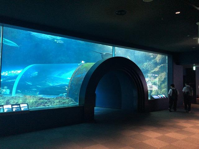 水族館の水中トンネル