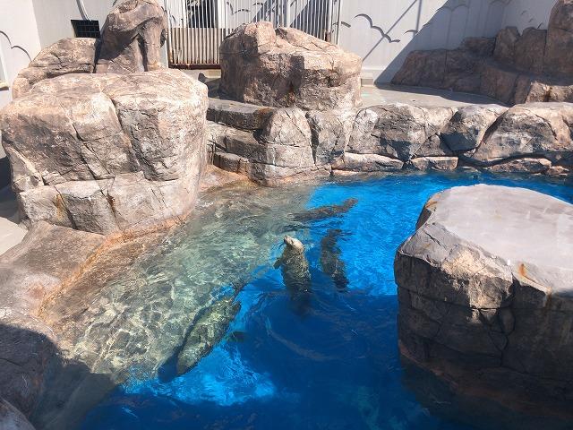 水族館のアザラシ
