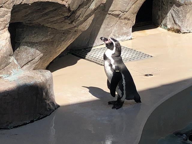 ぼっちペンギン