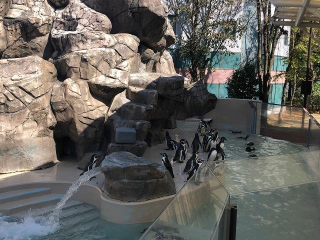 水族館のペンギン群れ