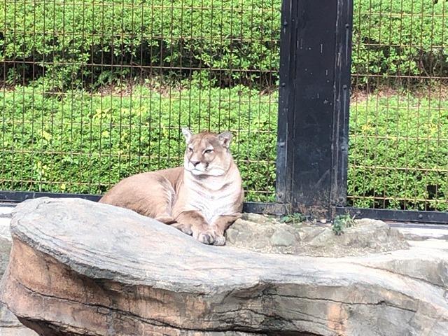 ライオンっぽいなんか