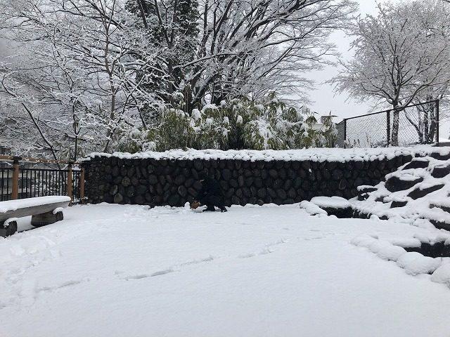 一人で雪遊びするおっさん