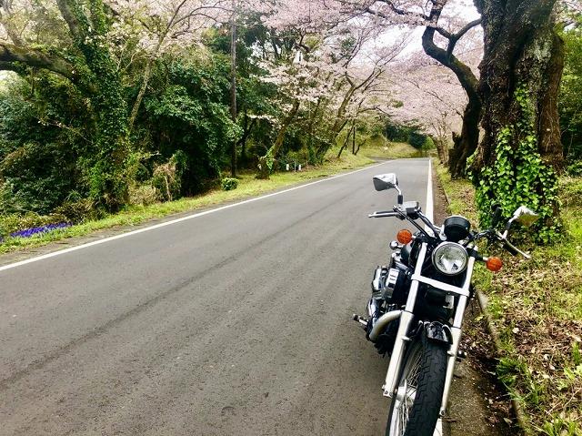 春のバイク
