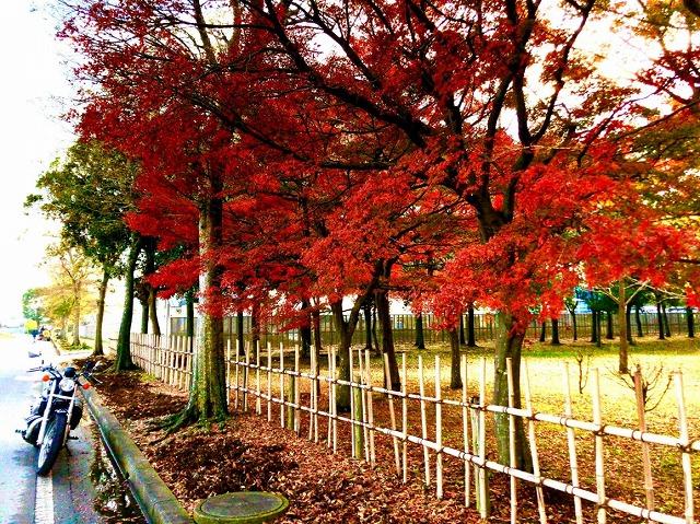 秋のバイク