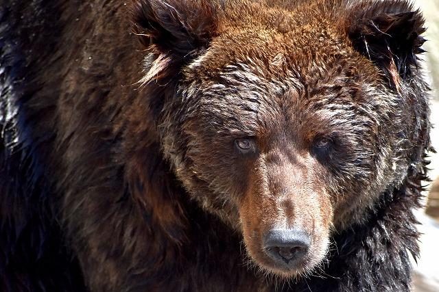 熊の凶暴さがわかる話