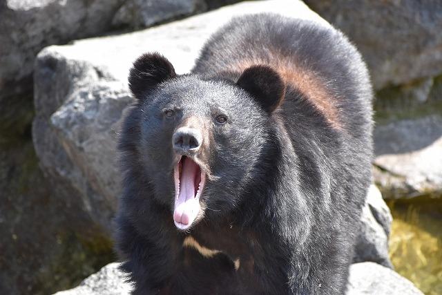 クマの凶暴さに恐怖