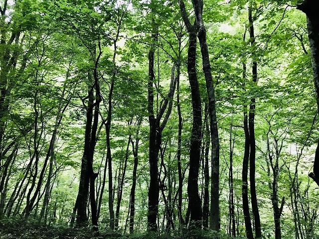 木が少ないキャンプ場は虫が少ない