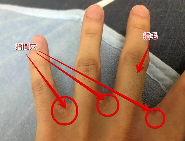 指間穴と指毛